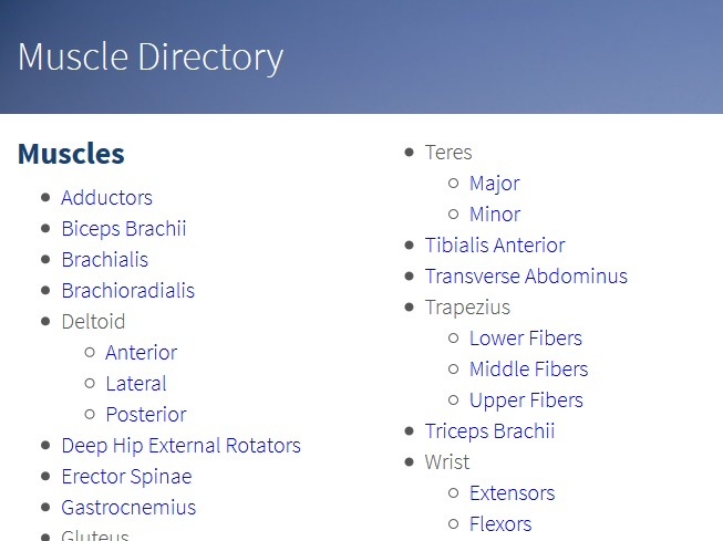 Muscle Directory
