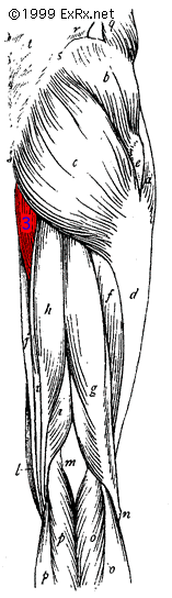 Hip Adductors Rear
